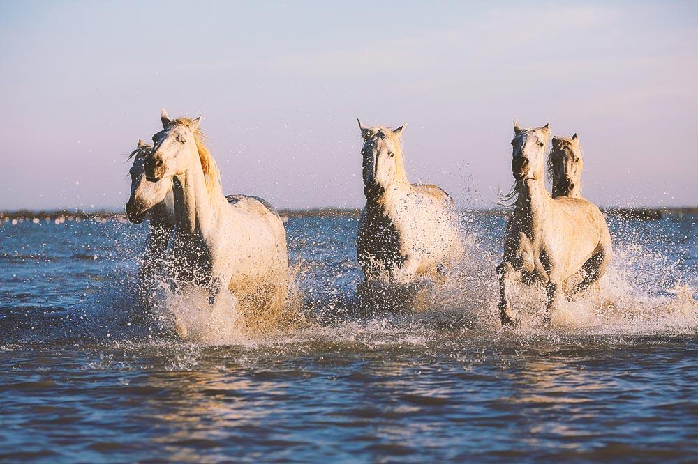 Cavallo che corre sulla spiaggia