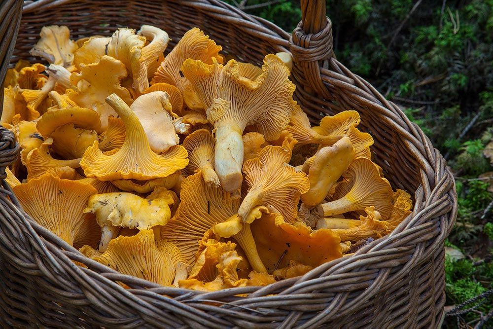 Cestino di funghi